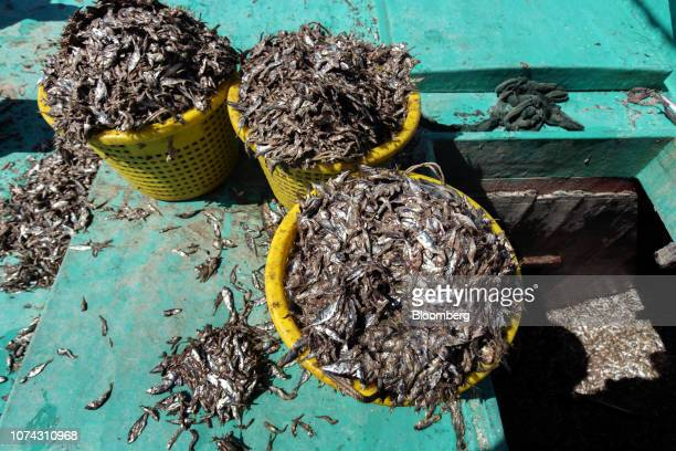 Baskets of salted anchovies sit on a Red Boat Fish Sauce fishing boat during a tour hosted by the company off the island of Phu Quoc Vietnam on...