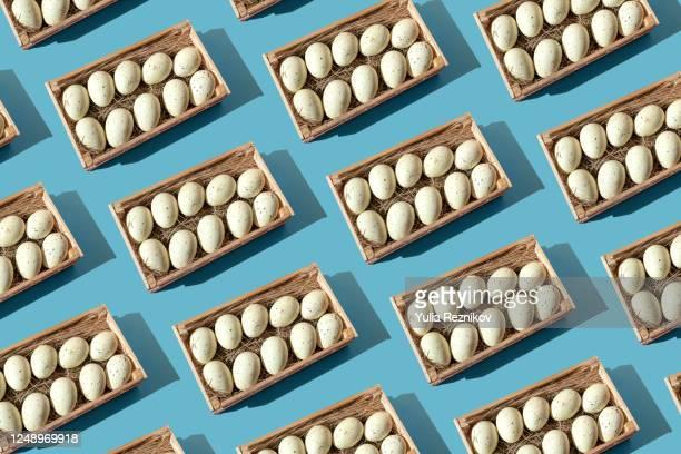 baskets with animal eggs on the blue background - tierbauten stock-fotos und bilder