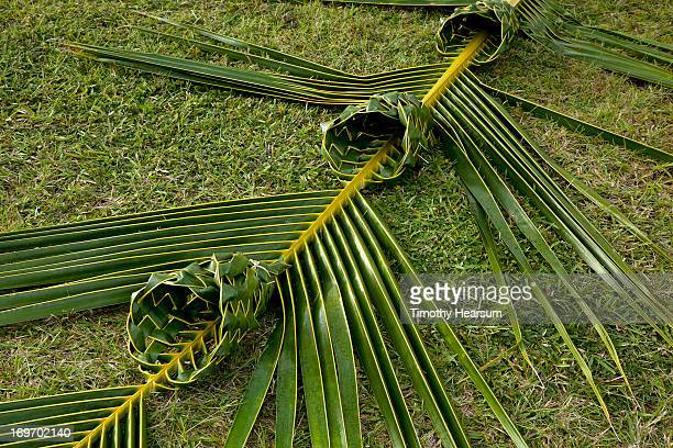 baskets woven into one coconut palm frond - timothy hearsum stock photos and pictures