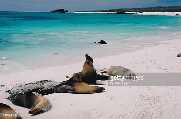Basking sea lions, Galapagos