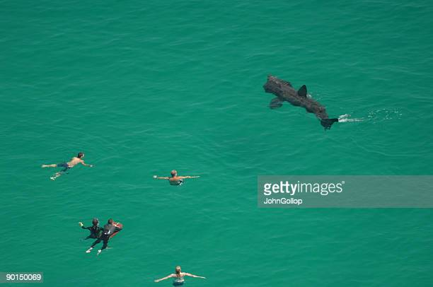 basking shark, cornwall - cornwall england stock pictures, royalty-free photos & images