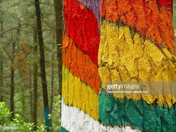 baso margoztuta / painted forest - ビスカヤ県 ストックフォトと画像