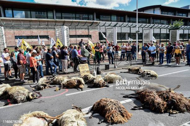 TOPSHOT Basque and Bearn breeders deposit corpses of sheep in front of the district's administrative office to protest against what they denounce as...