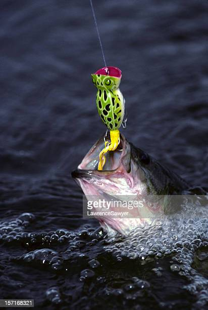 bass and popper lure - bass fishing stock pictures, royalty-free photos & images