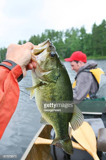 bass and teenager - bass fishing stock pictures, royalty-free photos & images