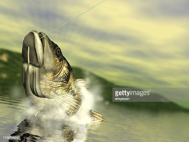 bass fishing - big fish stock pictures, royalty-free photos & images
