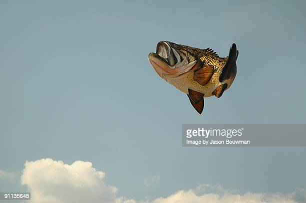 bass - largemouth bass stock pictures, royalty-free photos & images