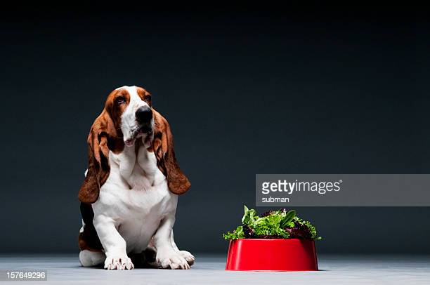 Bassett hound sat next to red bowl of lettuce.