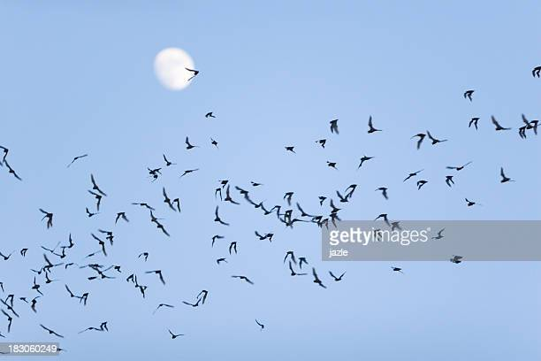 bat swarm - mammal stock pictures, royalty-free photos & images