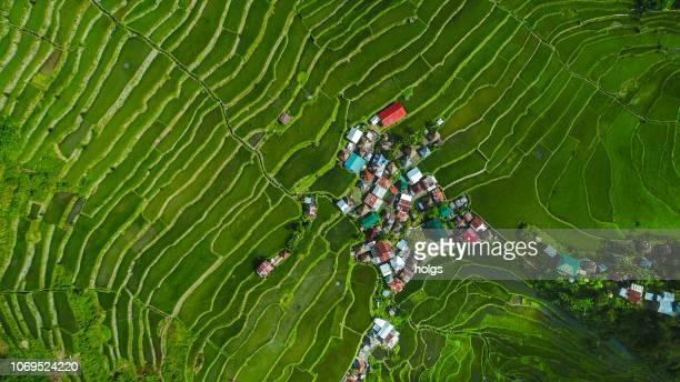 batad rice terraces, banaue, ifugao op het eiland luzon - rice terrace stockfoto's en -beelden