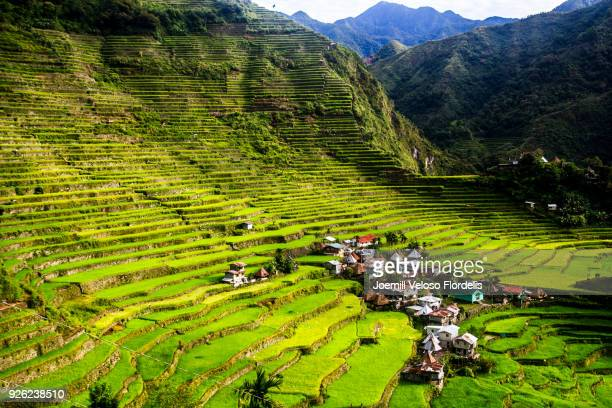 batad rice terraces (banaue, ifugao, philippines) - joemill flordelis stock pictures, royalty-free photos & images