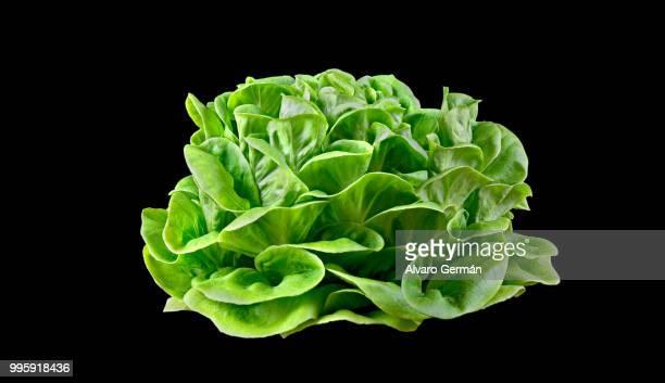 batavia lettuce. - microscopio elettronico a scansione foto e immagini stock