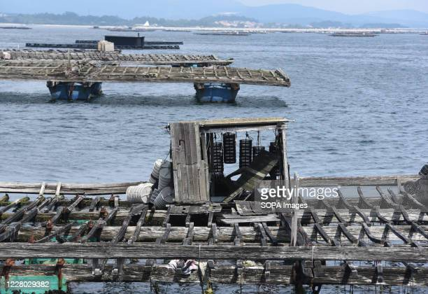 Batea is seen near O Grove Bateas are wooden platforms in the water for the farming of mussels oysters and scallops O Grove is a fishing village...