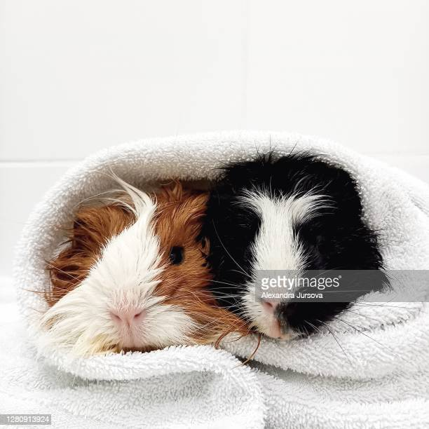 bath time - two animals stock pictures, royalty-free photos & images