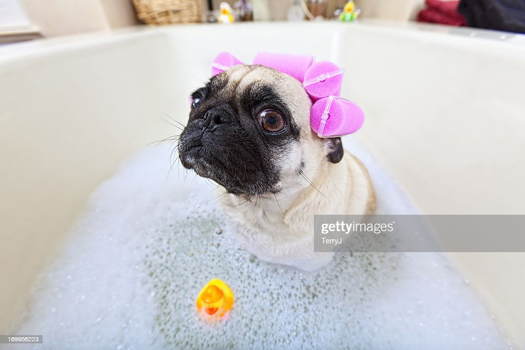 Puk Pukster stares at the camera while she takes a bubble bath with her pet rubber ducky.