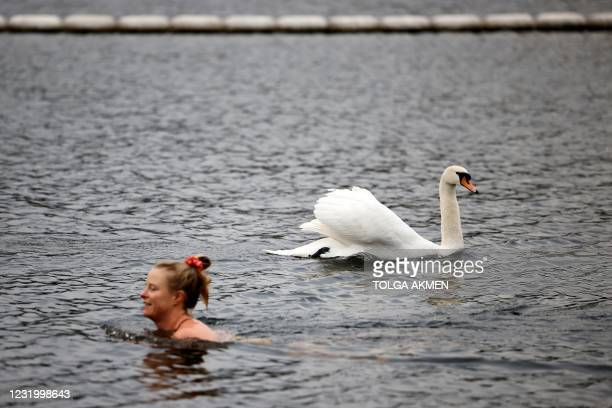 Bather swims past a swan in the Serpentine Lido in Hyde Park, London as England's third Covid-19 lockdown restrictions ease, allowing outdoor sports...