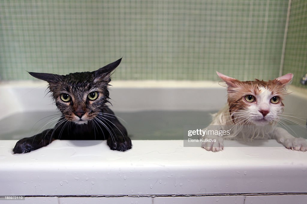 Bathing Felines : Stock Photo