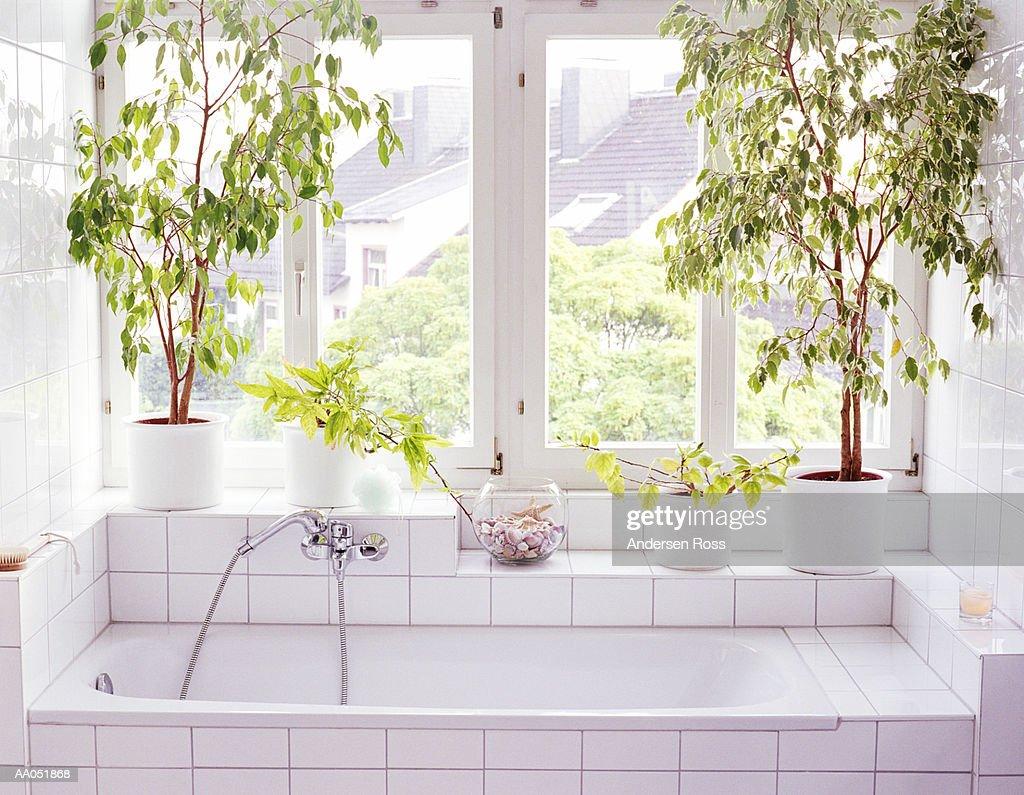 Bathroom Interior Plants And Windows Alongside Bathtub ストックフォト Getty Images