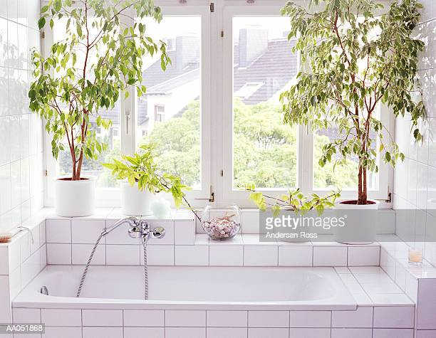 Bathroom interior, plants and windows alongside bathtub