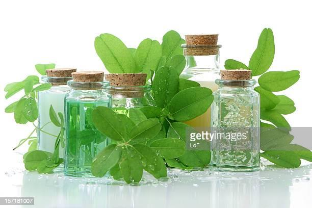 Pflegeprodukte-Komposition mit grünem Salat