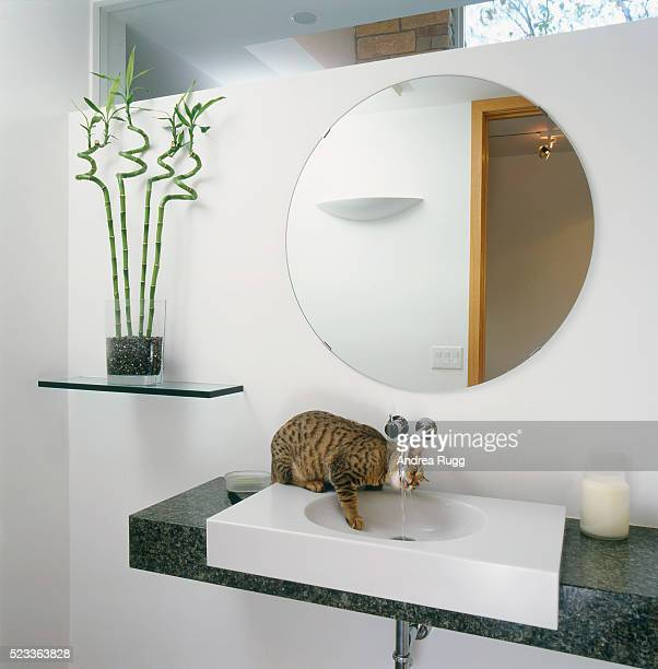 Bathroom with cat drinking from the faucet