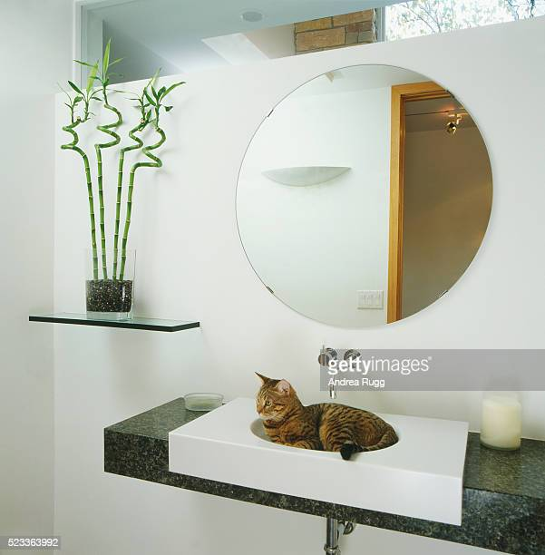 Bathroom with cat sitting in the sink