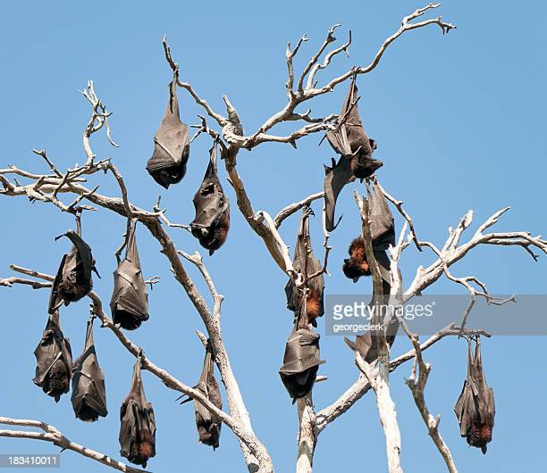 Bats Hanging Out Together