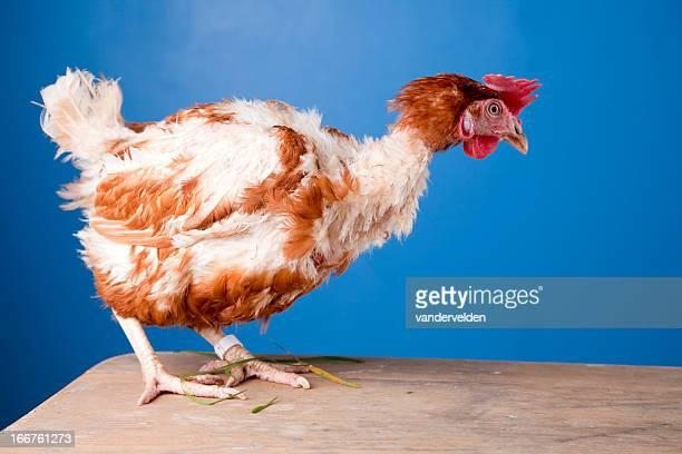 Hühnerauge Fotos