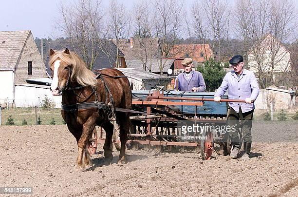 Bauern in Seelow mit einem Pferdegespann auf einem Feld bei der Aussaat von Hafer
