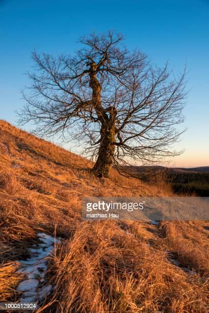 baum auf der wasserkuppe - baum stock pictures, royalty-free photos & images