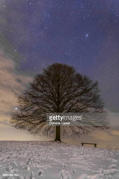 baum bei nacht - baum stock pictures, royalty-free photos & images
