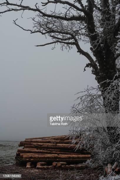 baum holzhaufen holzbeige frost landschaft im winter reif reife - baum stock pictures, royalty-free photos & images