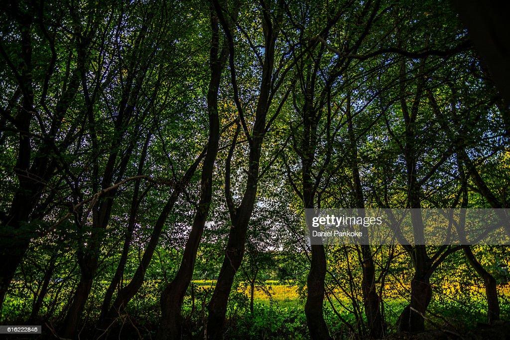 Baum Silhouette : Stock Photo