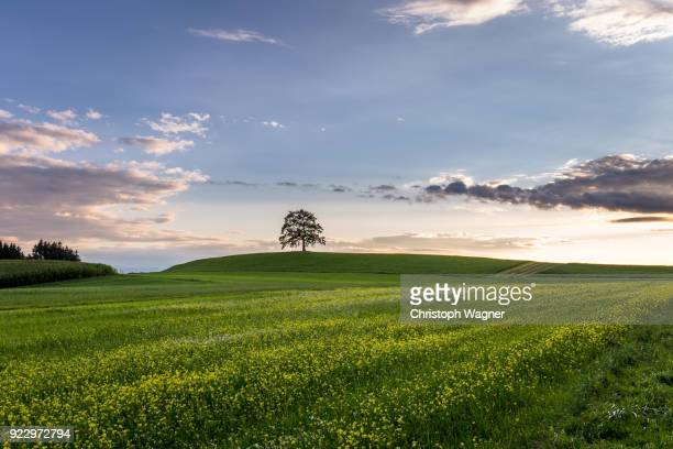 bavarian alps - chiemgau - rolling landscape stock pictures, royalty-free photos & images