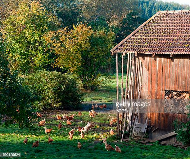 bavarian chickens - chicken coop stock pictures, royalty-free photos & images