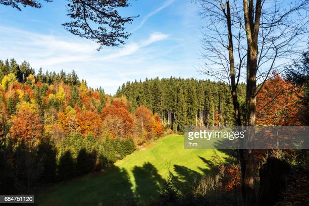 Bavarian forest in autumn colors (Bavaria, Germany)