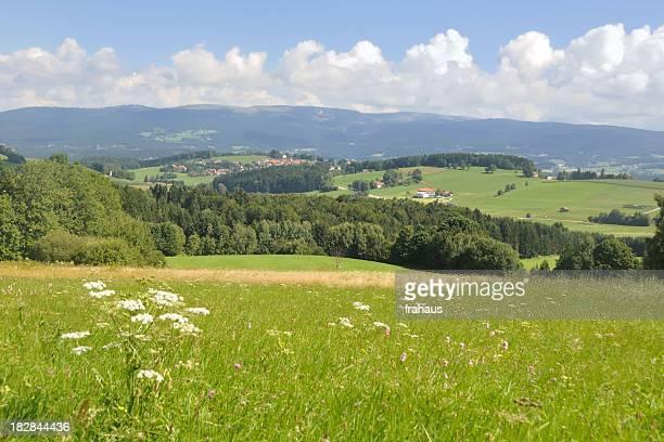Bavarian Wald