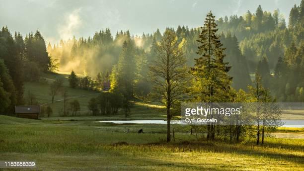 bavarian nature - krün stock-fotos und bilder