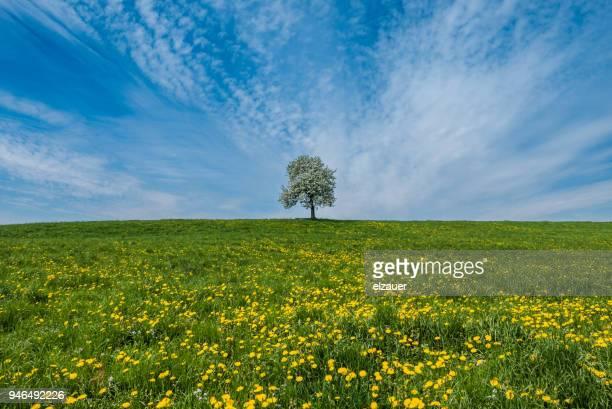 bavarian rural scene - watzmann massif stock photos and pictures