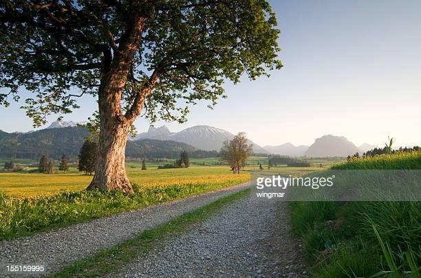 Bayerische spring Wiese mit Bäumen auf der linken Seite