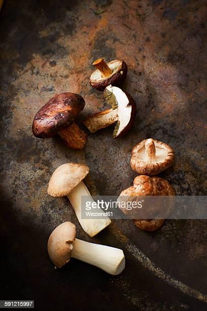 bay boletus, shitake mushroom and king trumpet mushrooms - king trumpet mushroom stock pictures, royalty-free photos & images