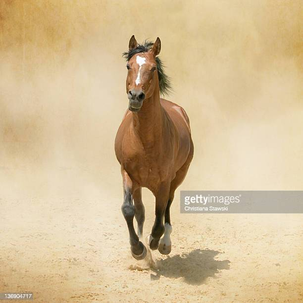 Bay horse galloping in dust