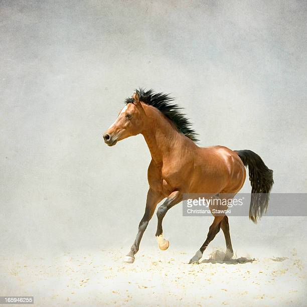 Bay horse galloping in sand