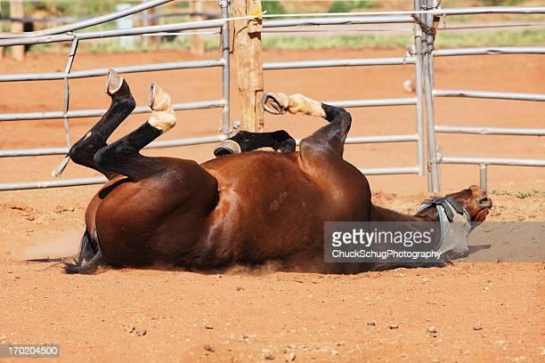 Bay Horse Mustang Dust Bath