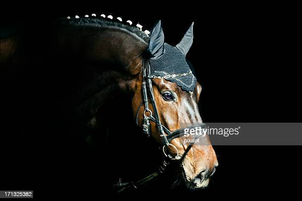 bay horse portrait - bay horse stock photos and pictures