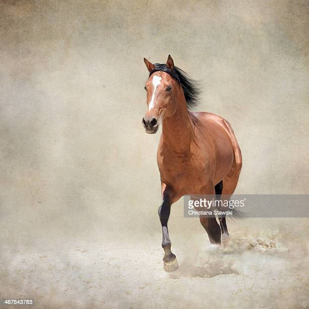 bay horse trotting through dust - bay horse stock photos and pictures