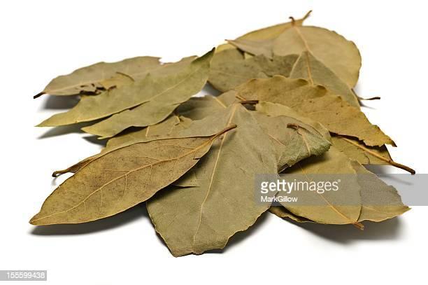Bay Blätter