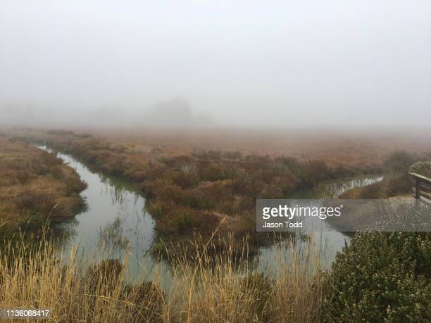 bay marsh water inlet with coastal plant life on foggy day - jason todd stock photos and pictures