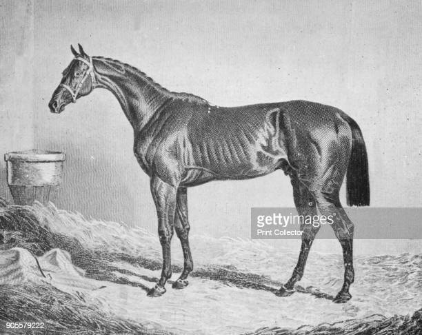 'Bay Middleton' 18331857 From British Sports and Sportsmen Part 1 [British Sports and Sportsmen London 1911] Artist Unknown