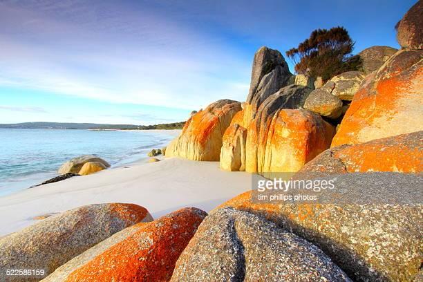 bay of fires tasmania australia - tasmania stock pictures, royalty-free photos & images